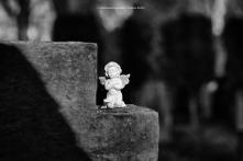 119-suedfriedhof-koeln