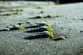 128-begraafsplaats-tongerseweg-maastricht